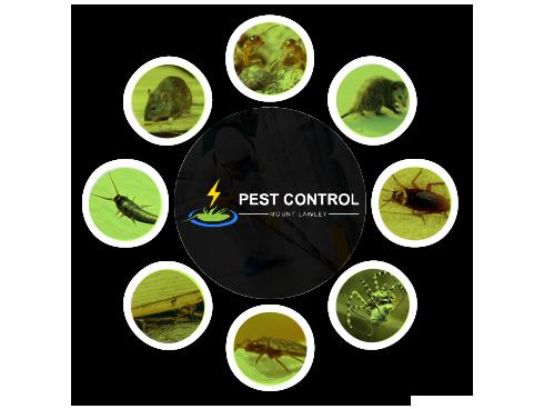Pest Control Mount Lawley