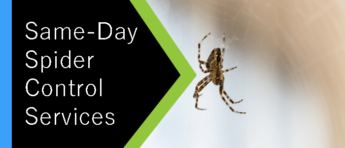 Same-Day Spider Control Services